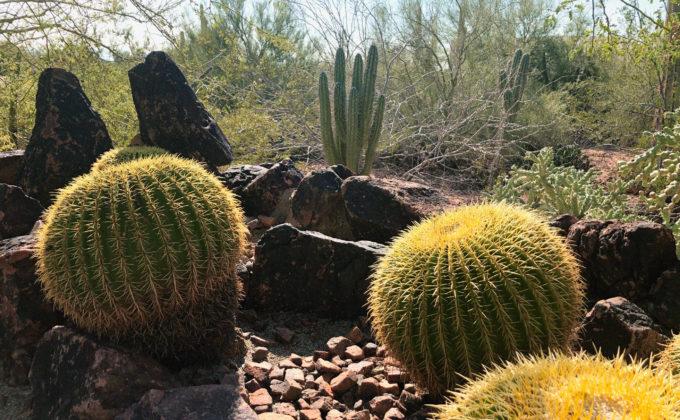 Cacti closeup