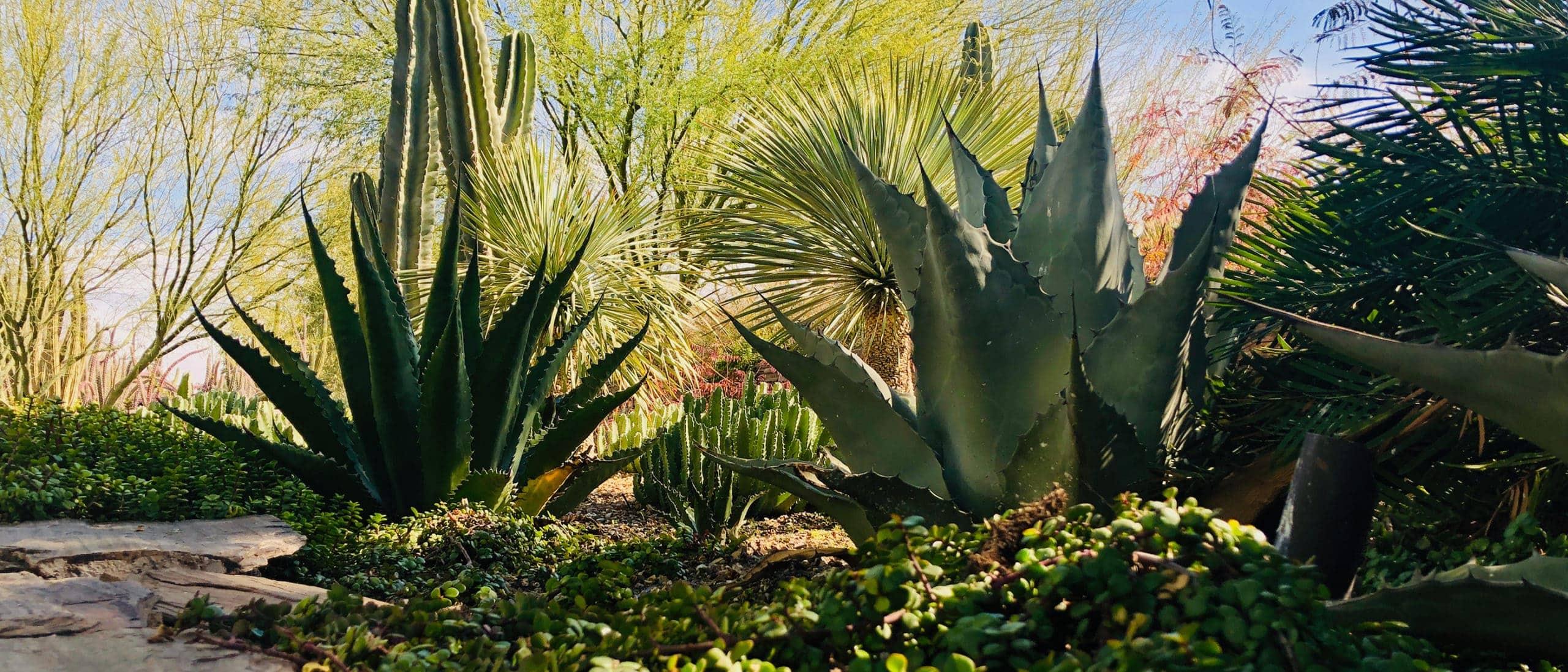 Desert Botanical Garden Nonprofit Brand Strategy
